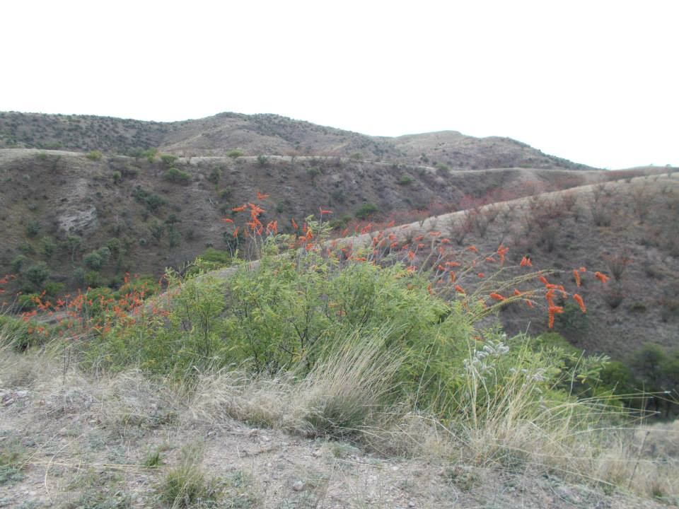 arivaca fields.jpg