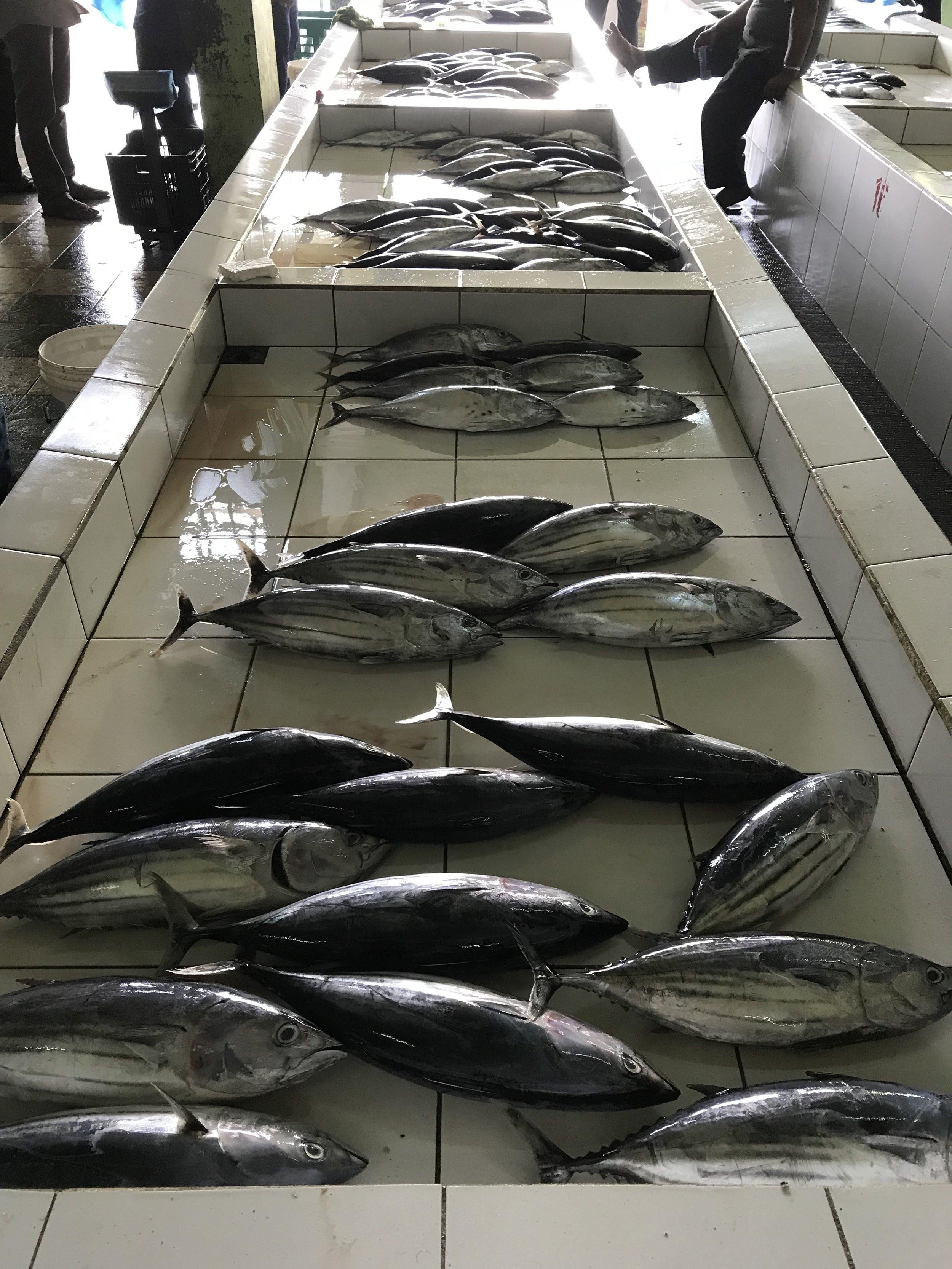 The Local Fish Market