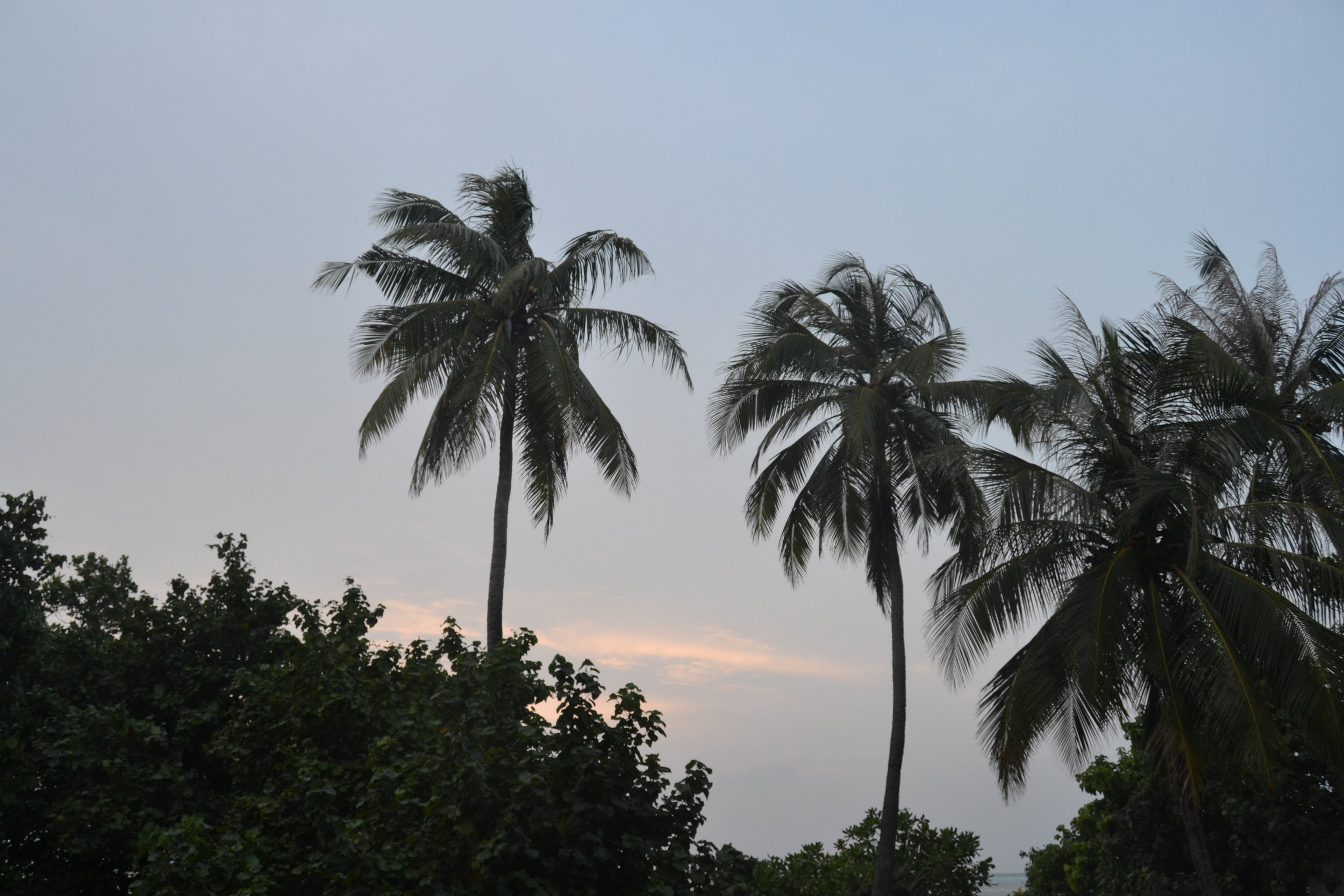 Palm Trees at Sunset.jpg