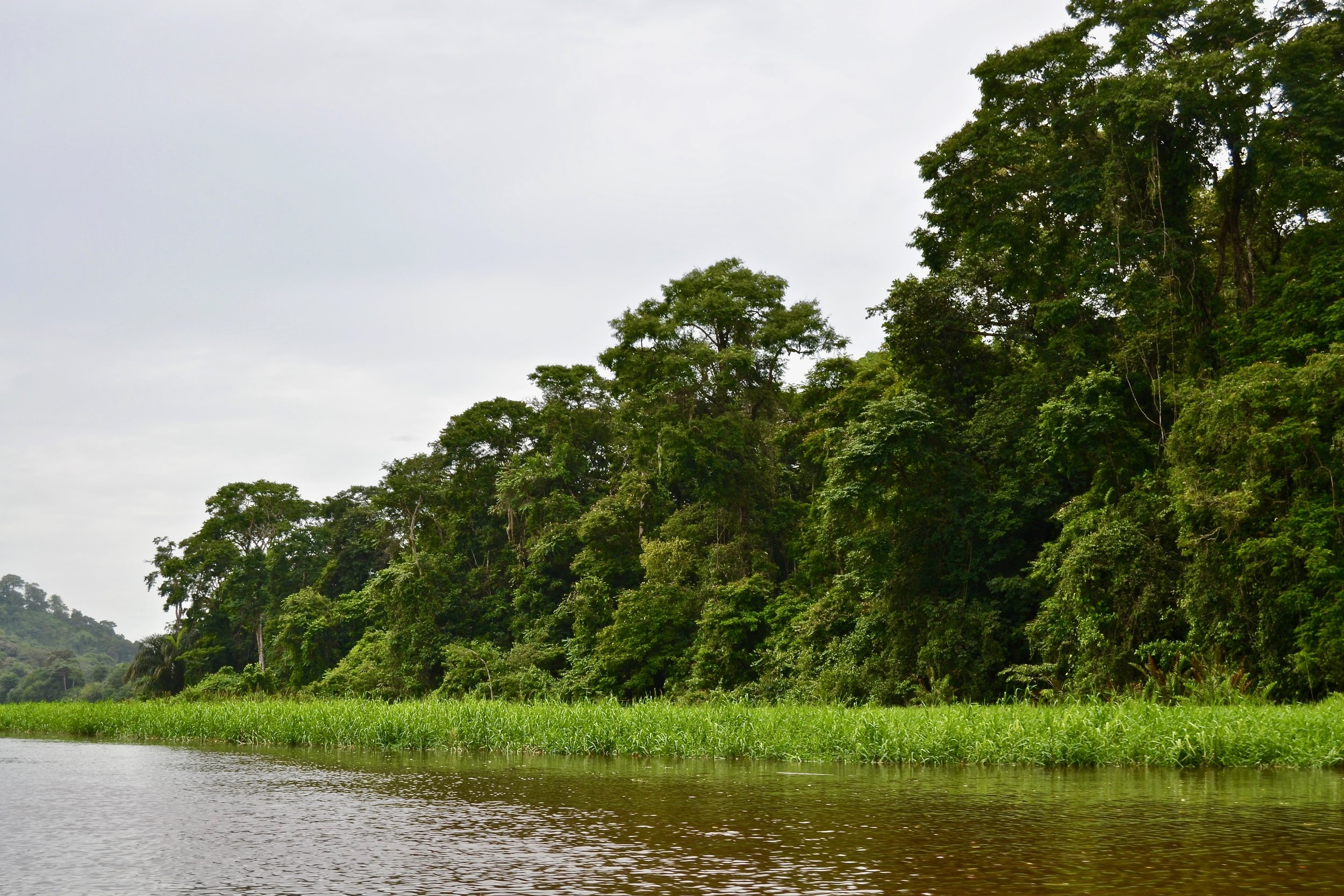 River in Tortuguero National Park.jpg