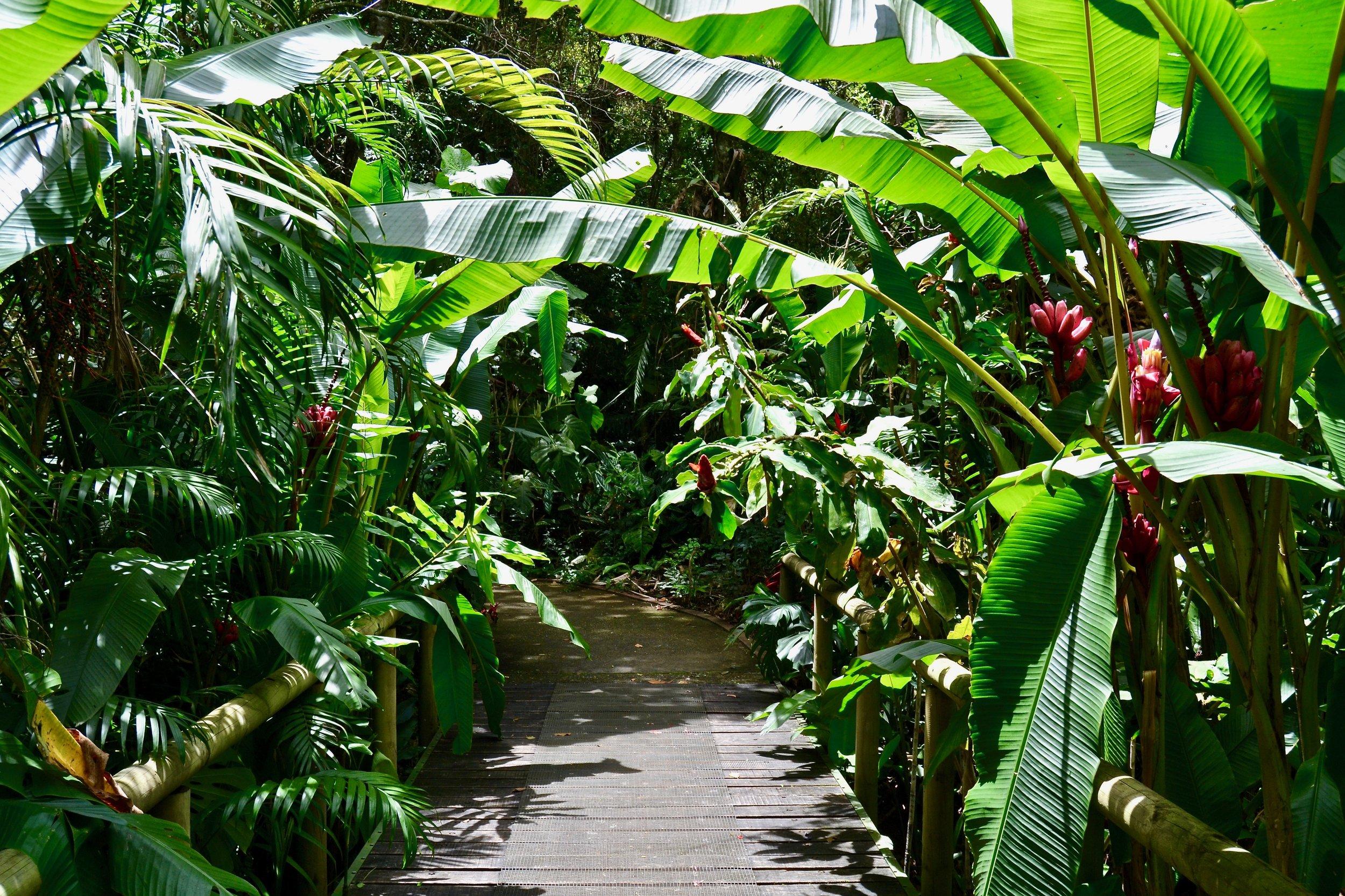 Walking through Lankester Botanical Garden
