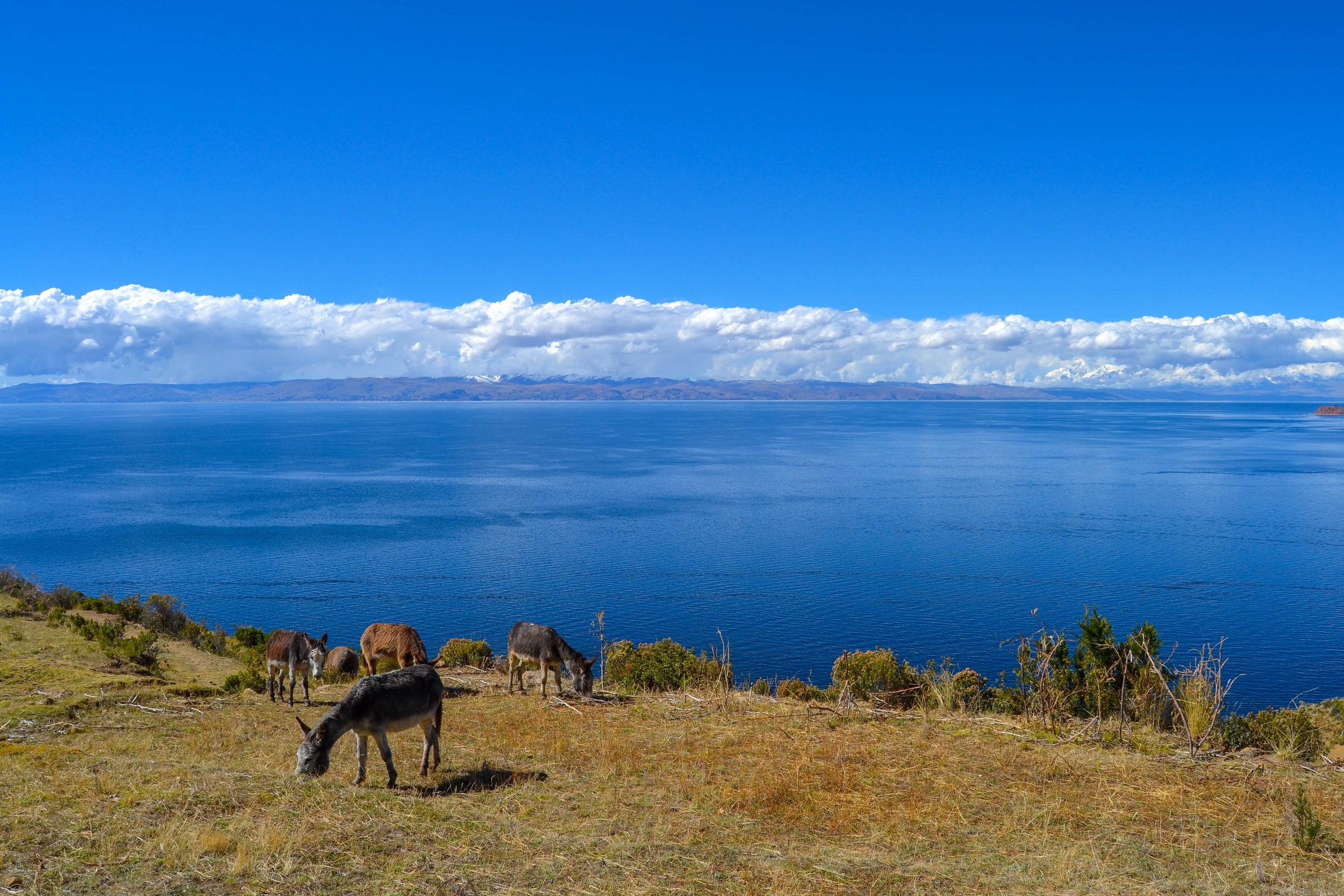 Donkeys on Isla del Sol.jpg