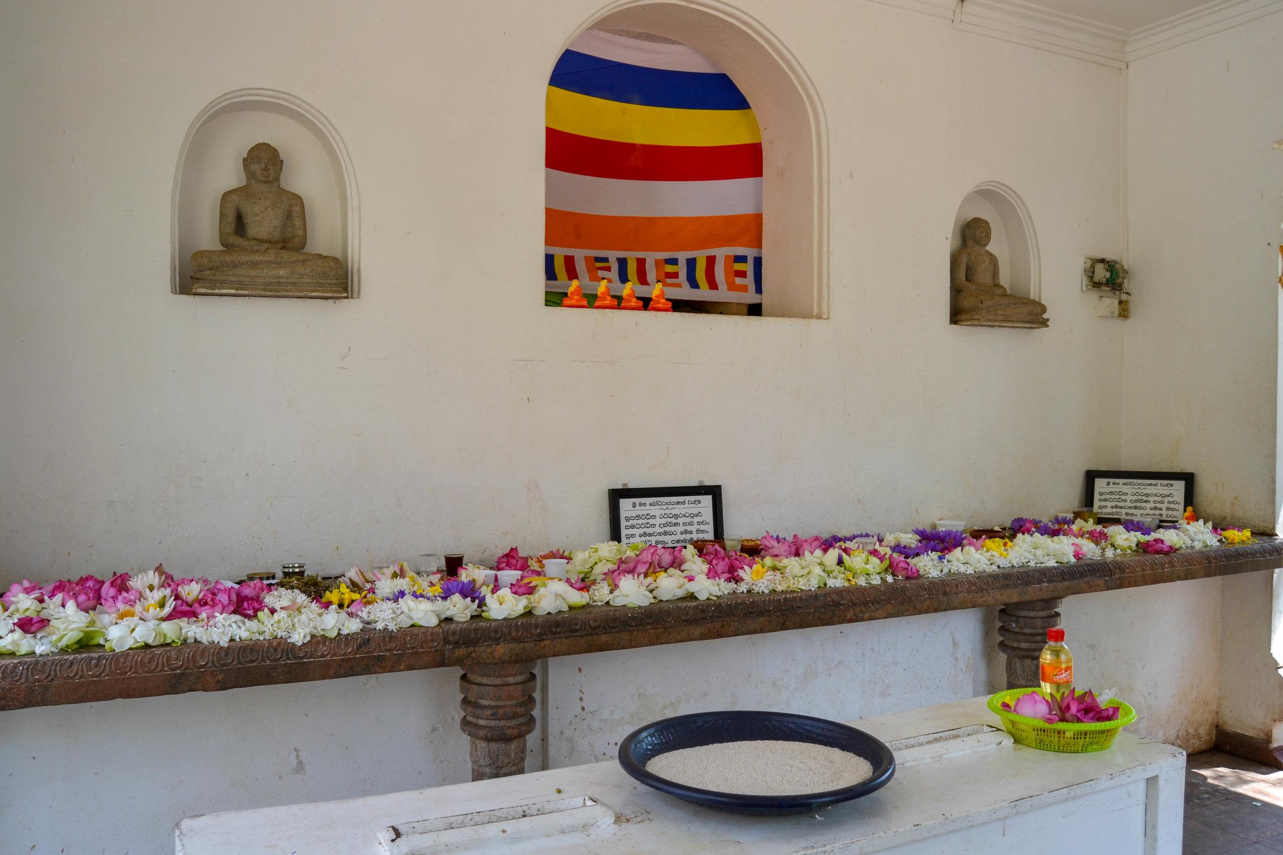 Offerings at Sri Maha Bodhi