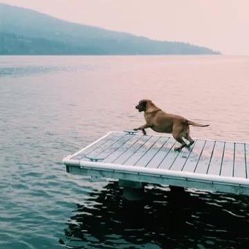 That Friday feeling! Woohoo!! 🎉🐕 have a fab Friday Everyone! Love, Roksana #dogs #petstagram #doglover #instadog #dogtraining #dogmum #instamoment #love #instagood #happiness #superdogmum #superdogmom #superhero #ilovemydog #dogslife #dogsofinstagram #dachshund #instagood #instalove #instapuppy #dogs_of_instagram #lovedogs #happy #love #friday #fridayfeeling #fridaymood #fridayvibes #weekend #weekendvibes
