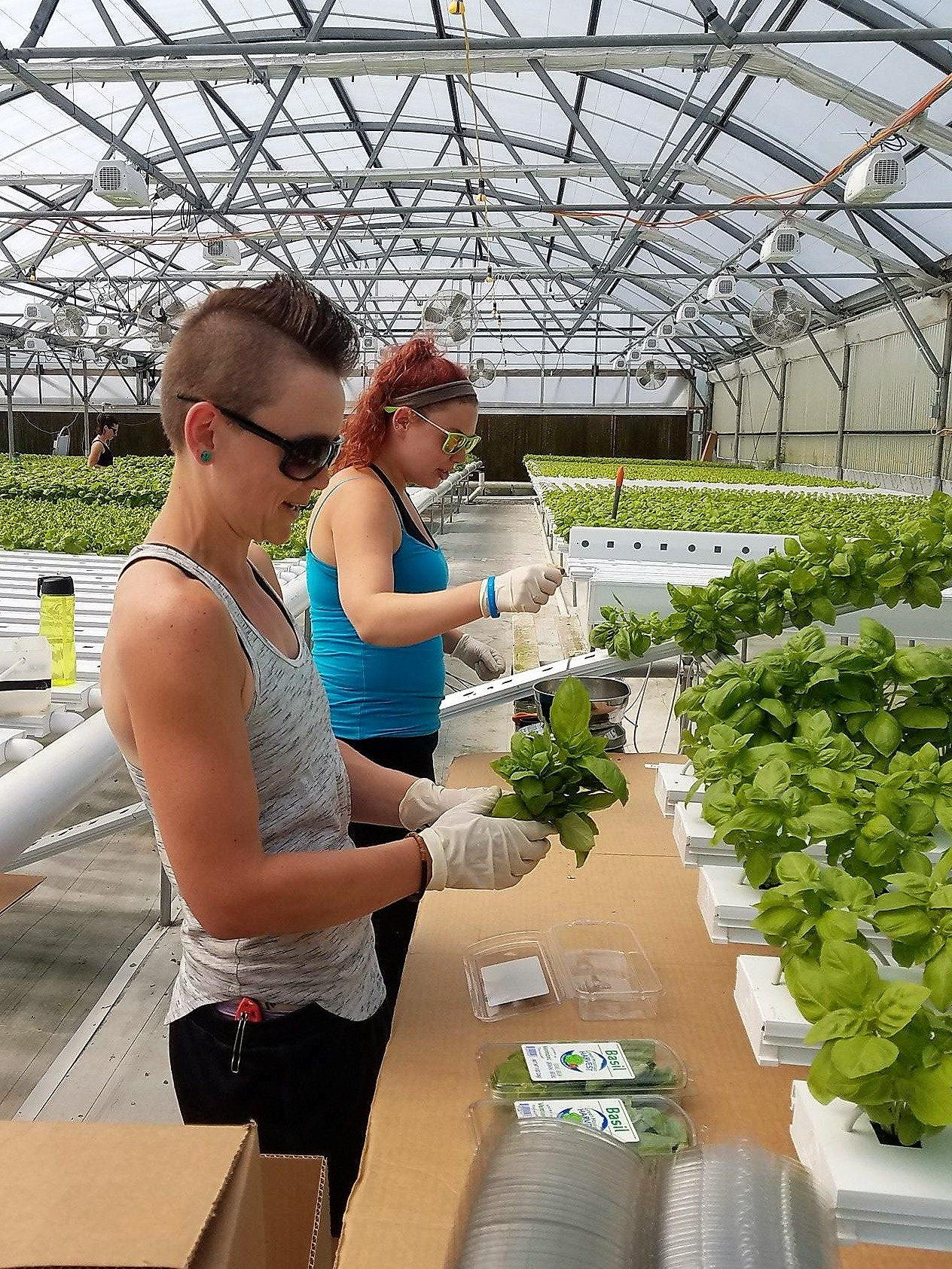 Green Mountain Harvest Hydroponic, Katie and Christina