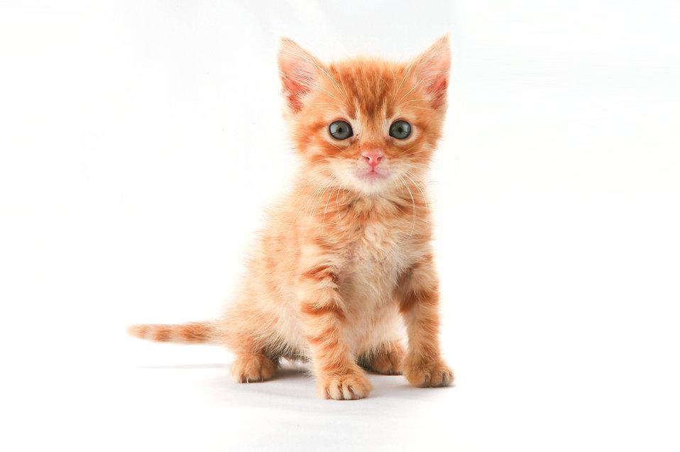Cute kitten to evoke compassion