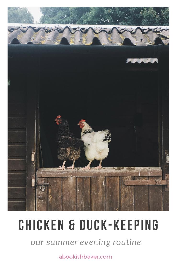 putting my free-range chickens & ducks to bed abookishbaker.com