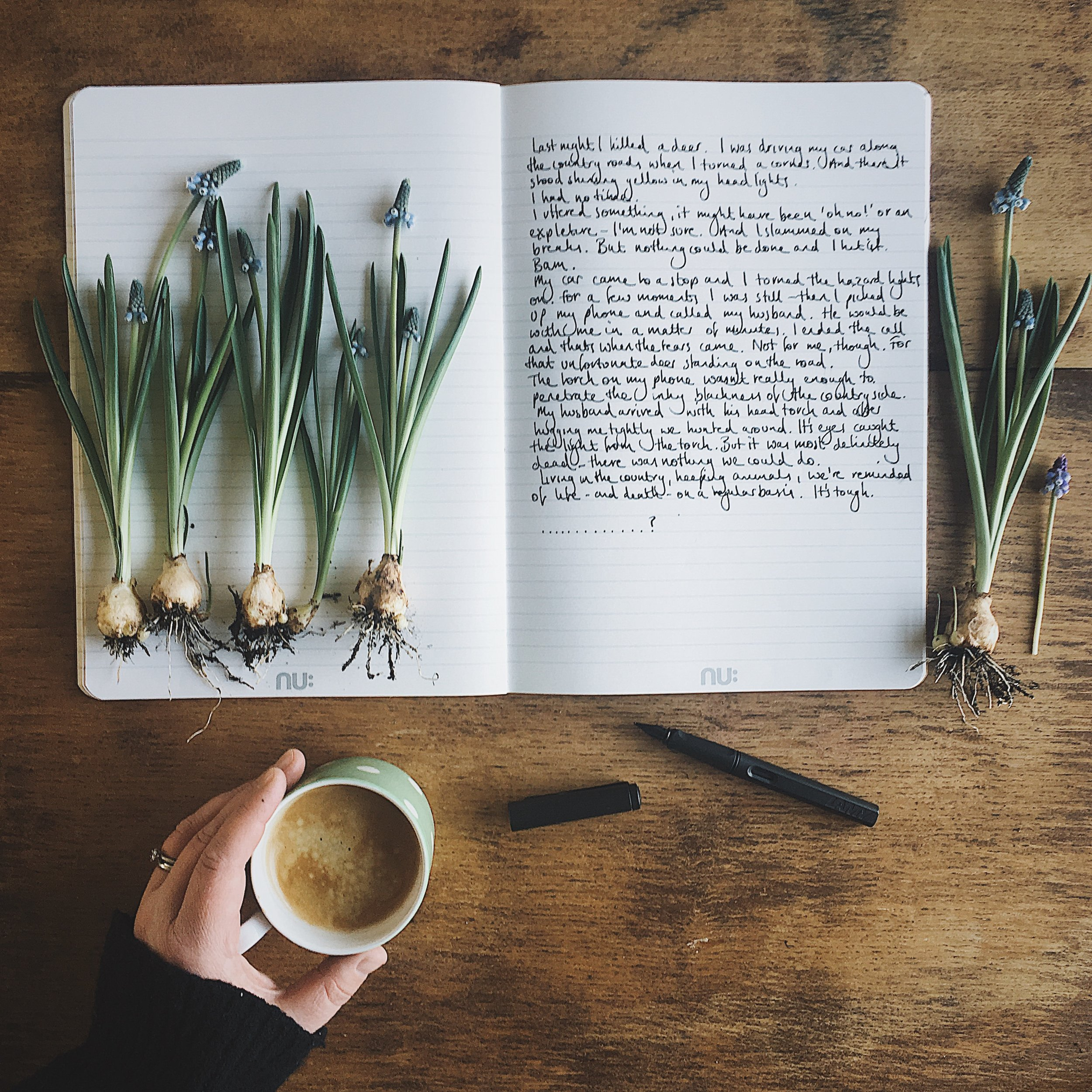 muscari bulbs on a bookish baker