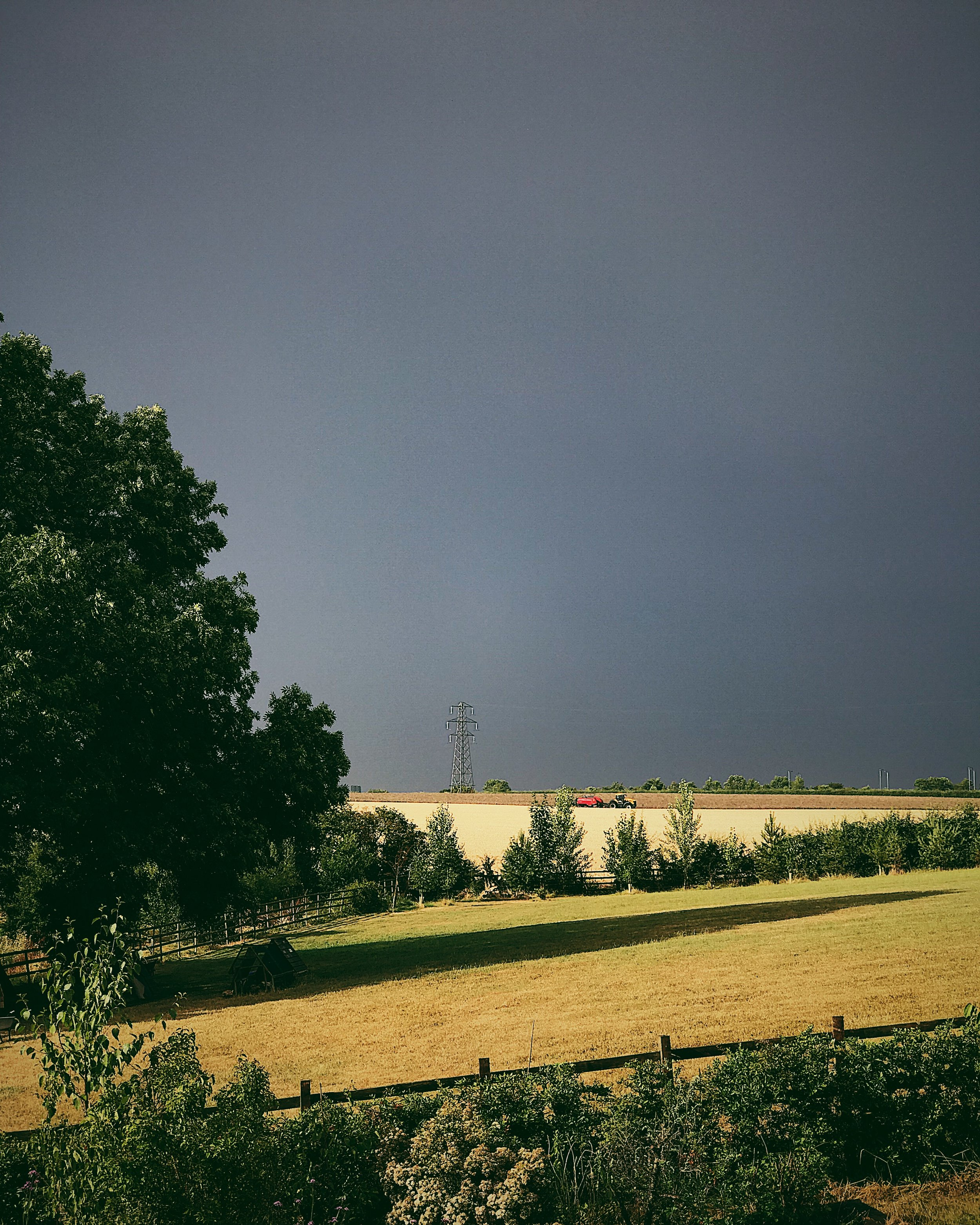 ash tree against a stormy sky