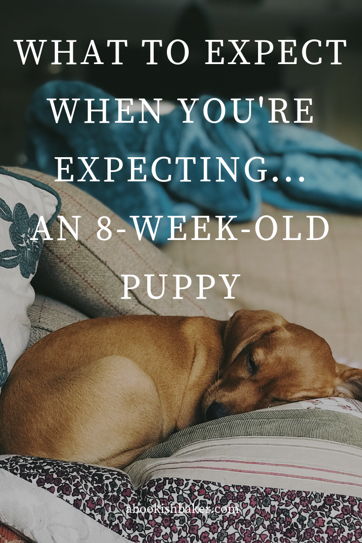 What to expect when you're expecting...an eight-week-old puppy