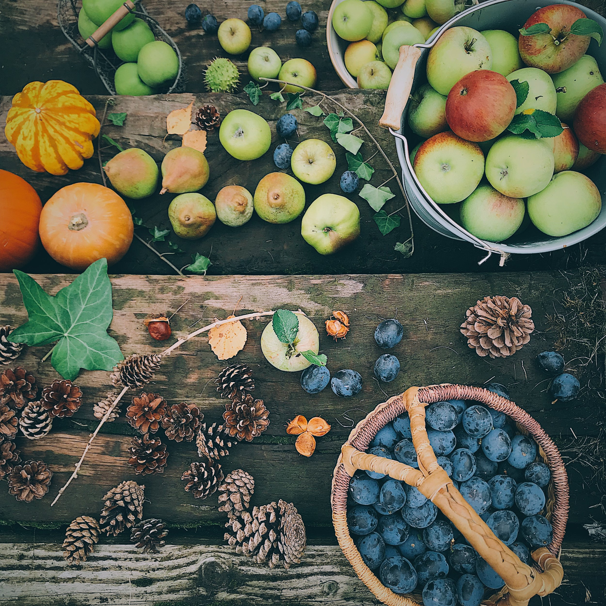 autumn fruits and leaves