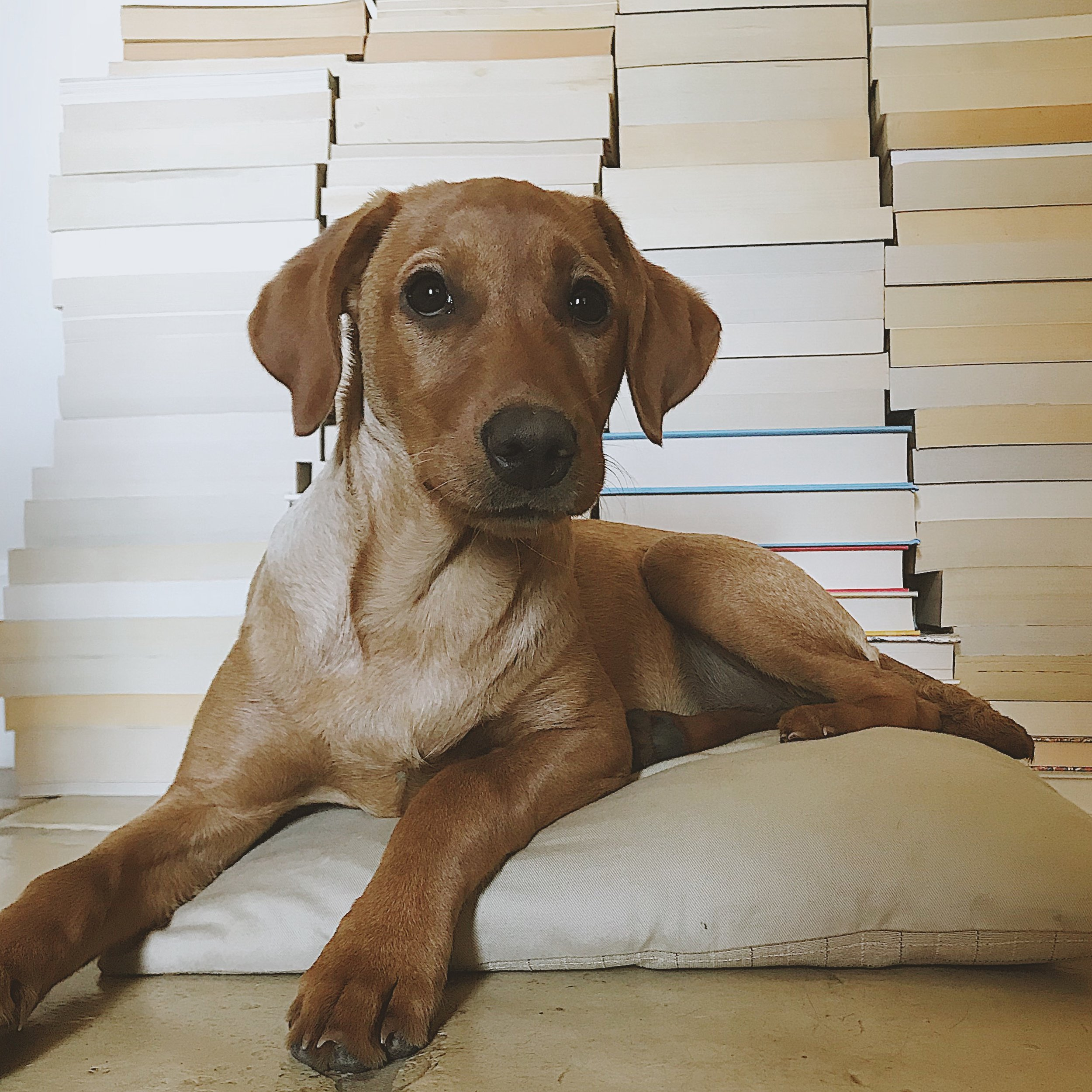 puppy and books