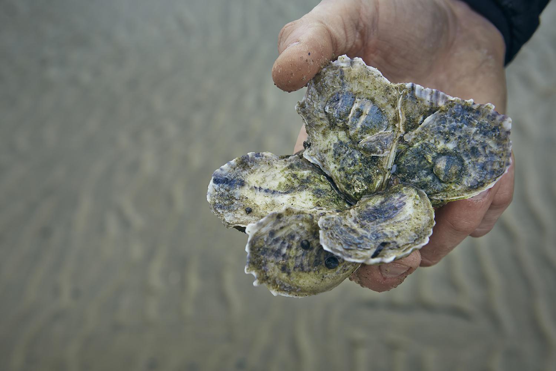 Oystering_15.jpg