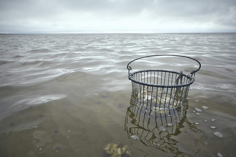 Oystering_58.jpg