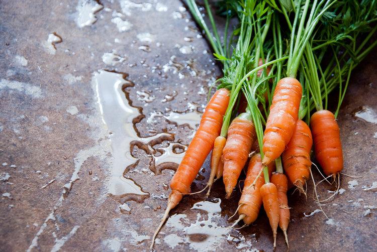 Manda Aiello Food Stylist Fresh Carrots.jpg