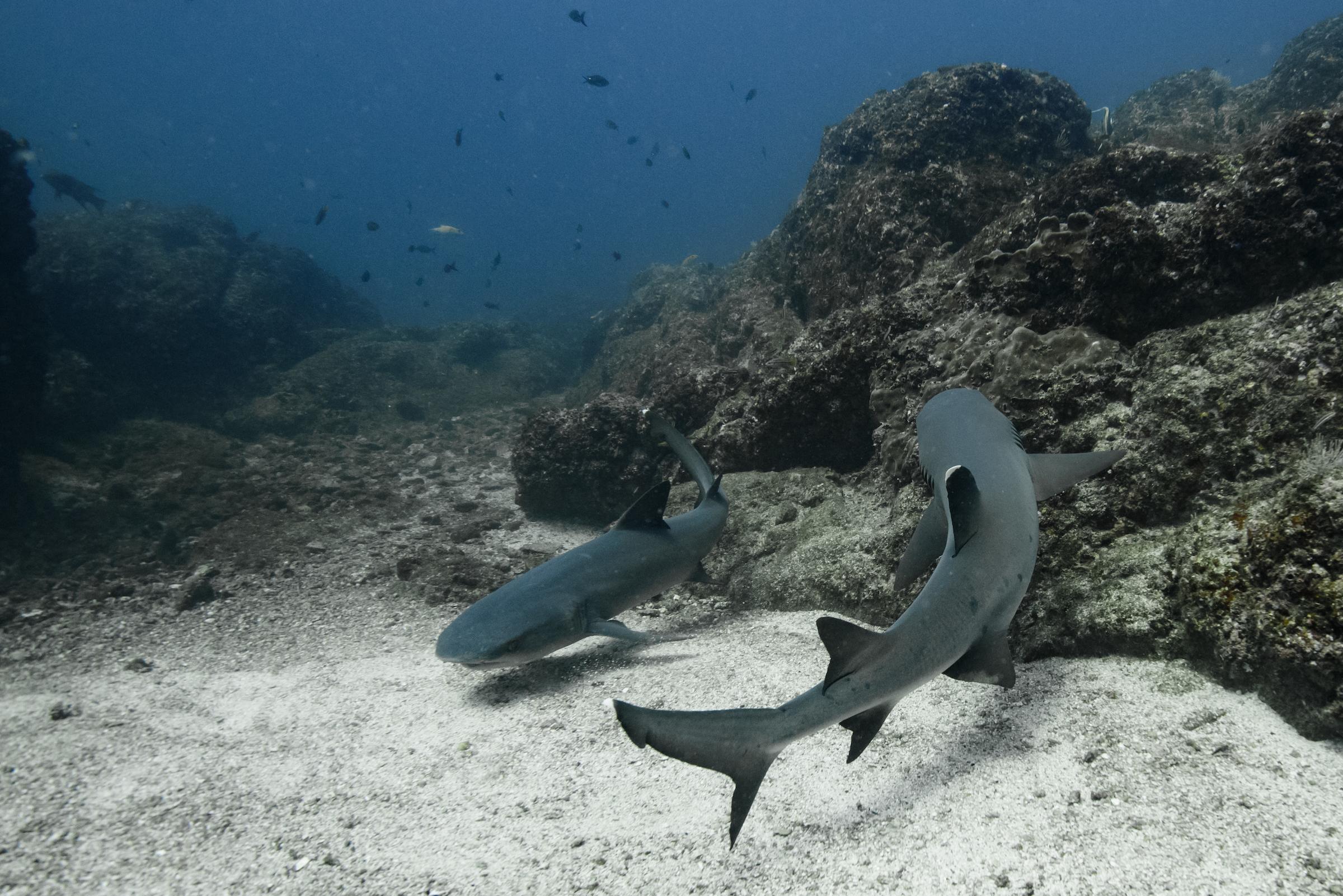 Costa Rica Scuba Diving-3971.jpg