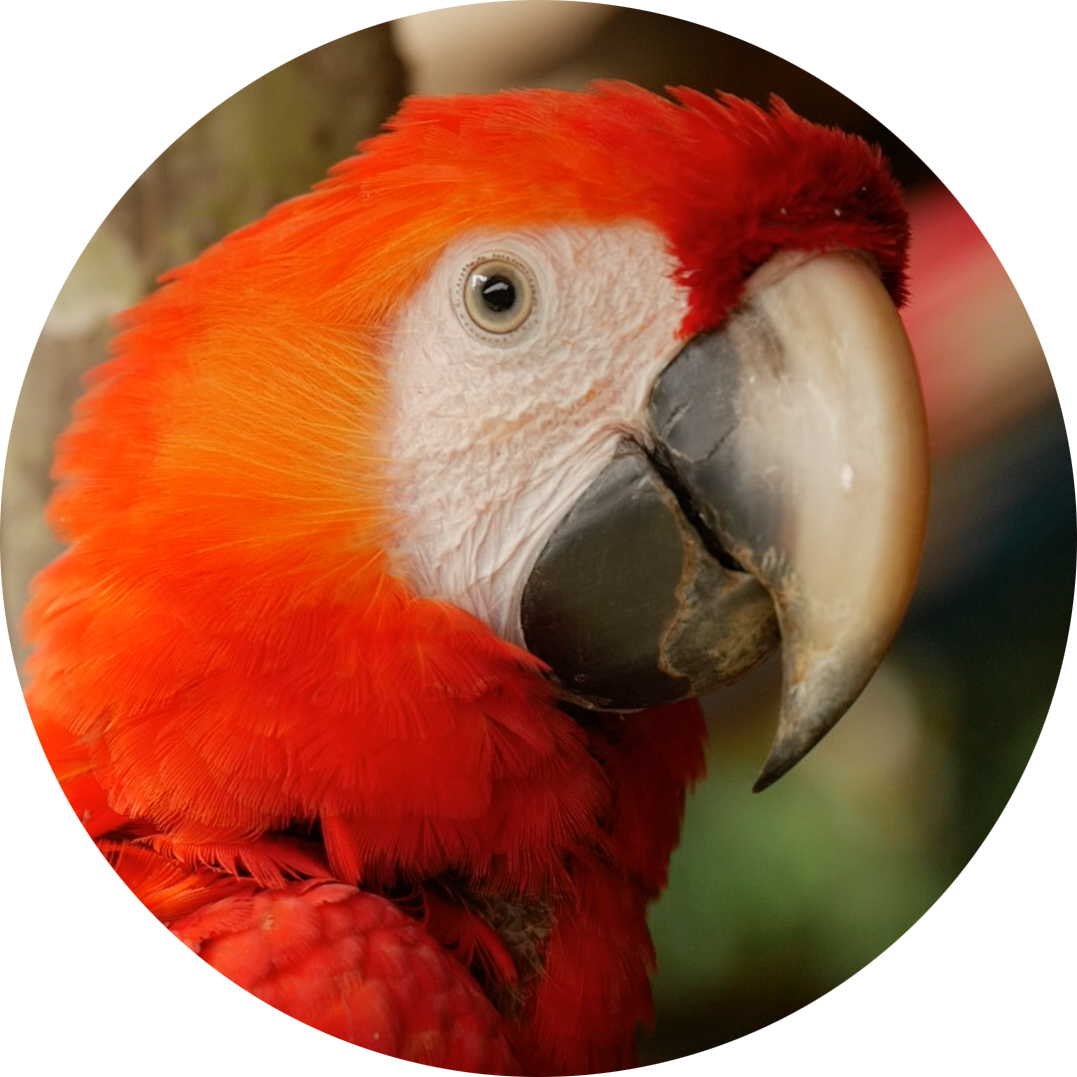 parrot round.png