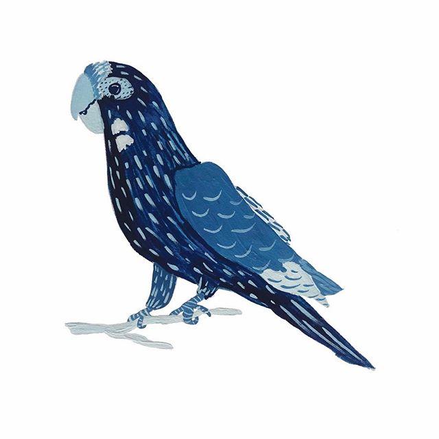 Parrot! ⠀⠀⠀⠀⠀⠀⠀⠀⠀ #graphicdesign #printdesigner #littleroaddesigns #littleroadstudio #fwportfolio #calledtocreate #creativeprocess #botanicalillustration #artistmom