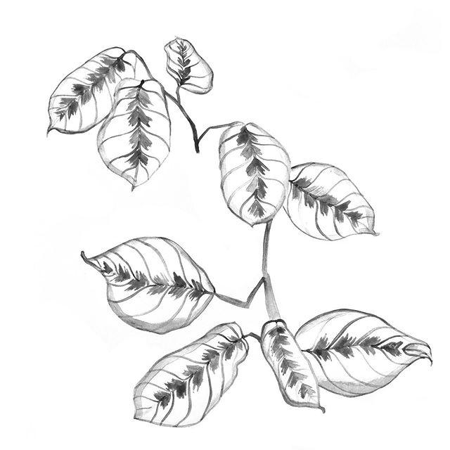 Houseplant 2 #graphicdesign #printdesigner #littleroaddesigns #littleroadstudio #fwportfolio #calledtocreate #creativeprocess #botanicalillustration #artistmom