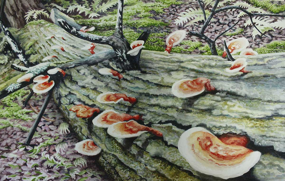 Hemlock Varnish Shelf Fungus