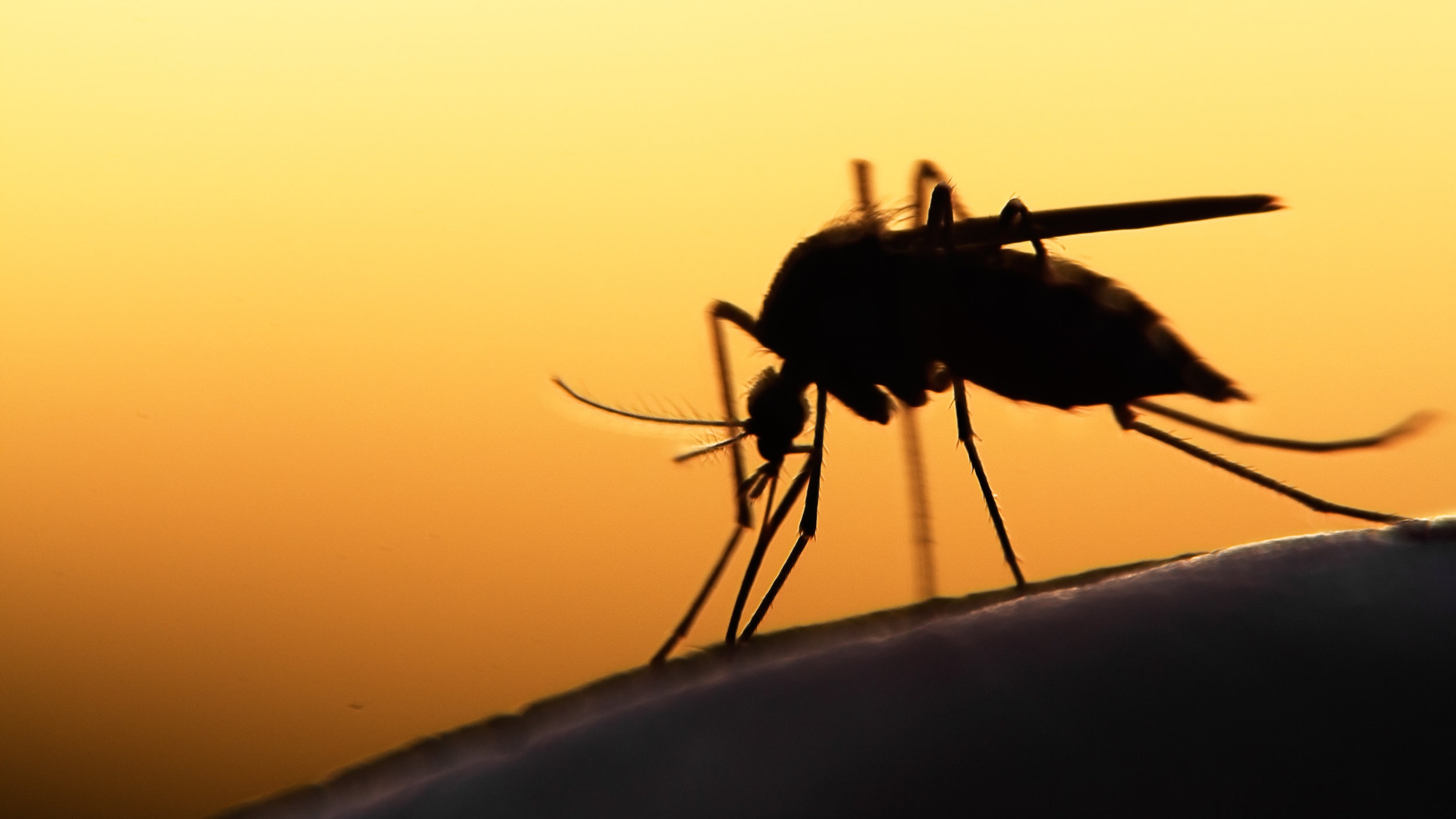 Mosquito Control Services -