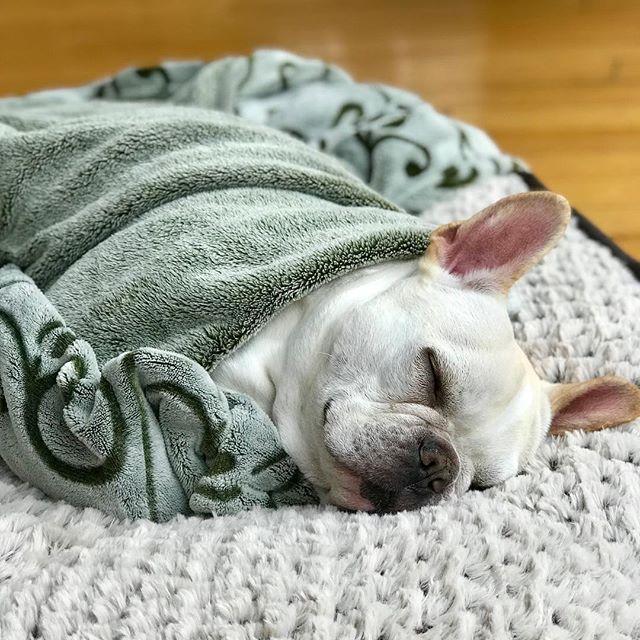 Happy birthday little burrito! 🎉🎁🎊 #frenchie #frenchbulldog #puppy #adlomedia #frenchiesofinstagram