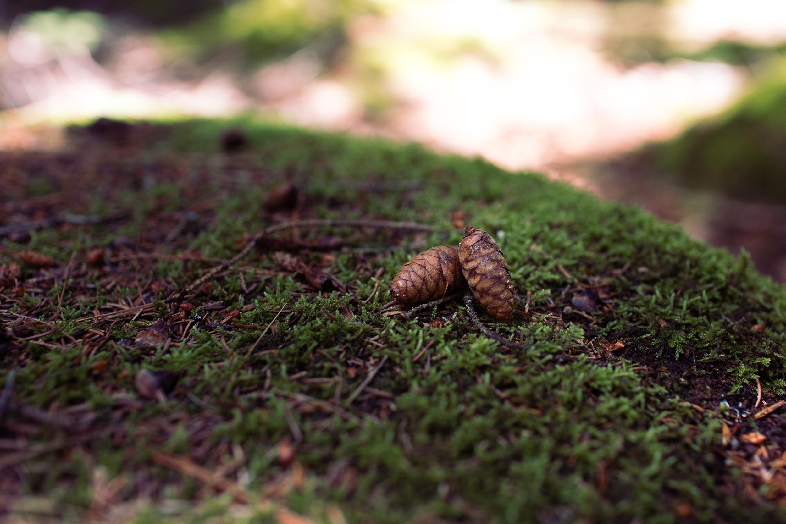 acadia-national-park-anna-mcclellan-photography-3097.jpg