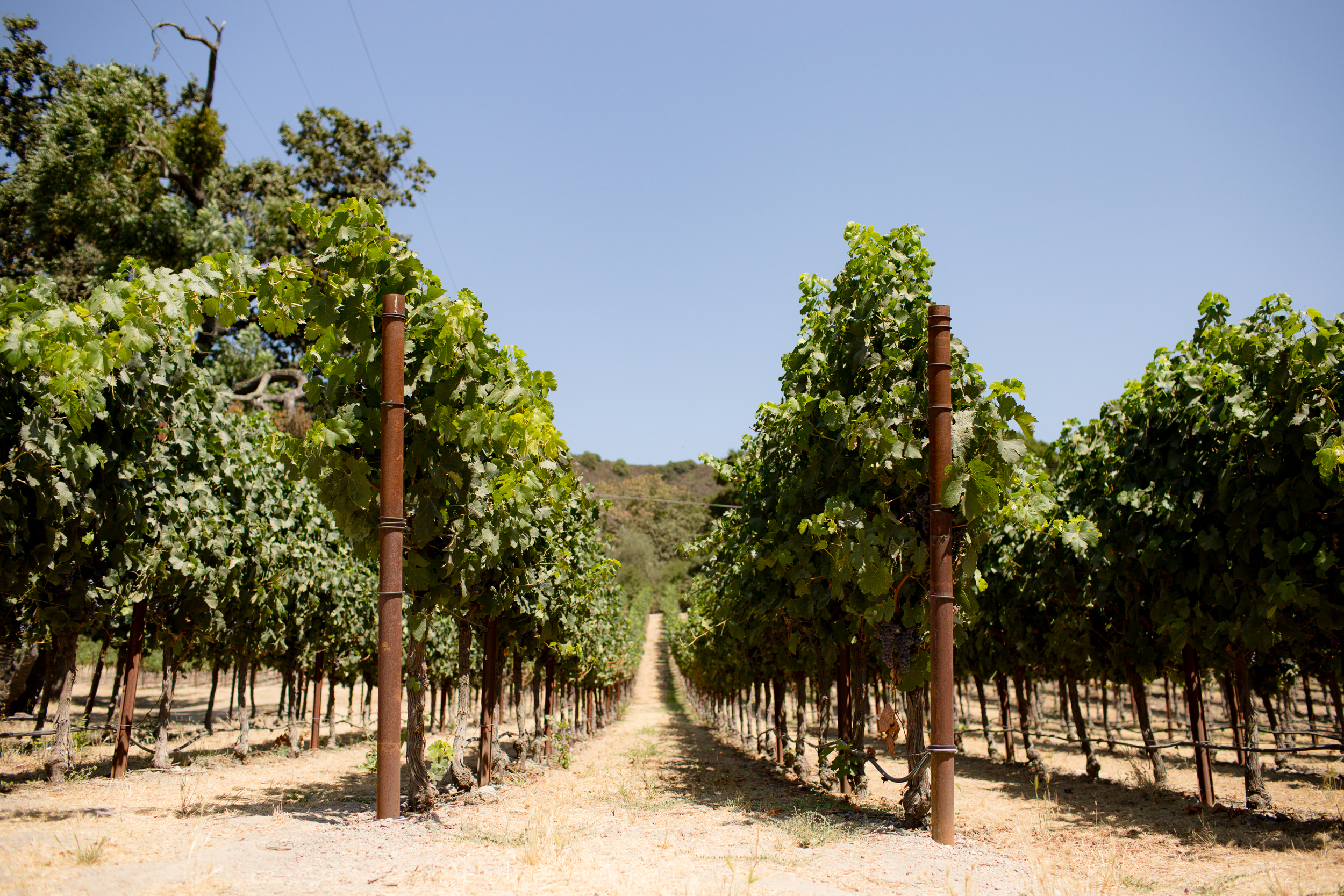 california-travel-photography-anna-mcclellan-photography-5726.jpg