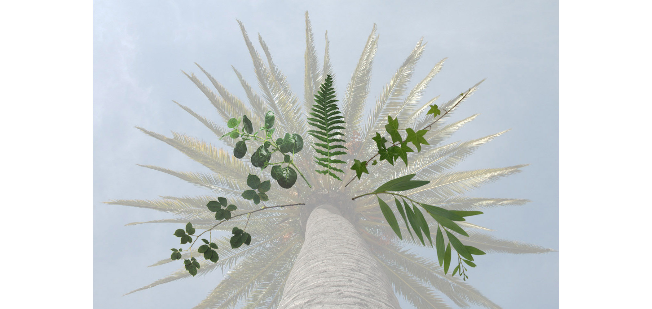 2-up epiphytes copy.jpg