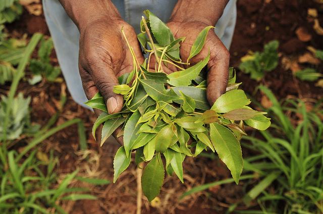 Global-Gardener-Neil-Palmer-CIAT-Code-Innovation-m4Ag.jpg