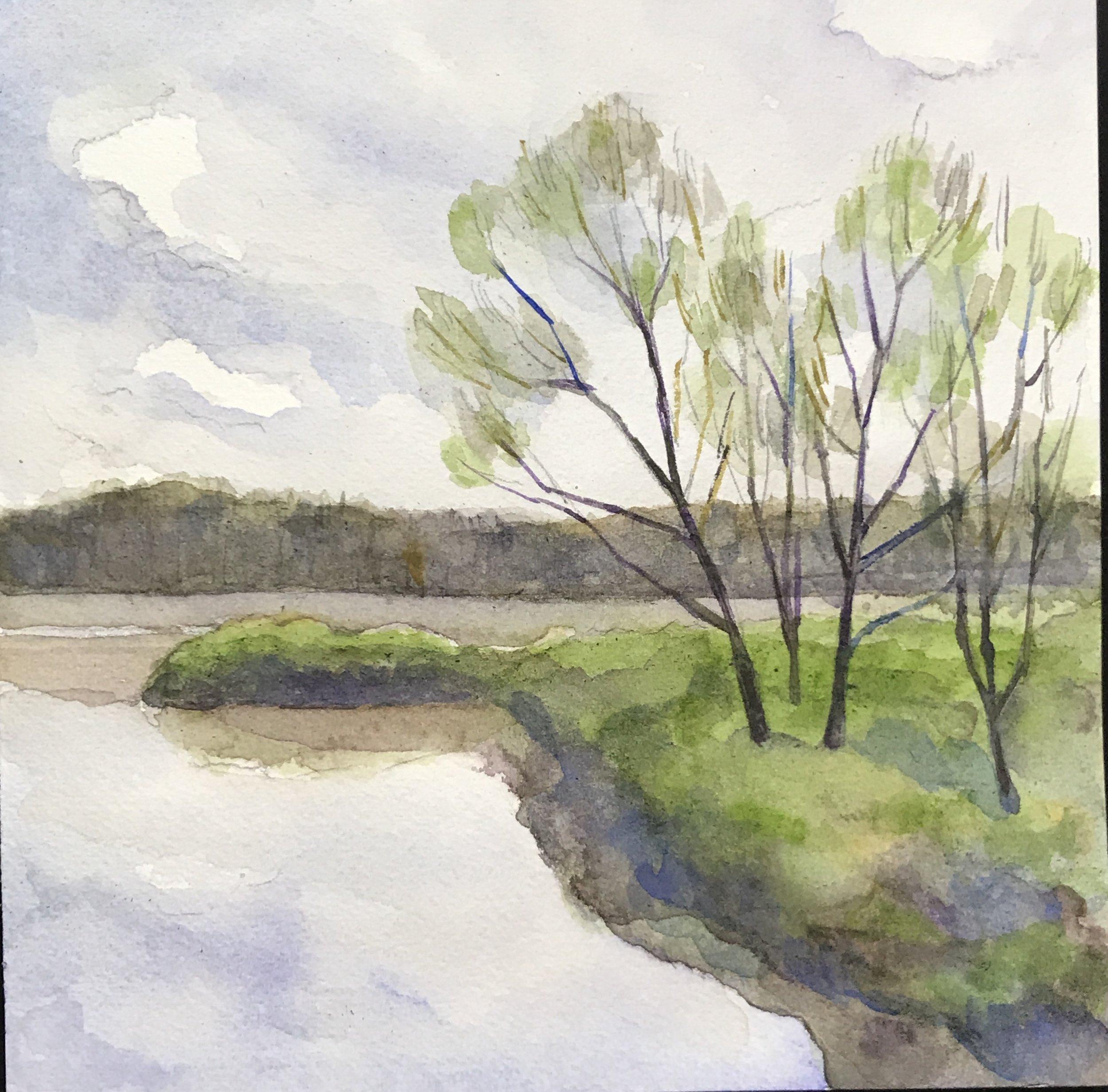 Maryland Swamp