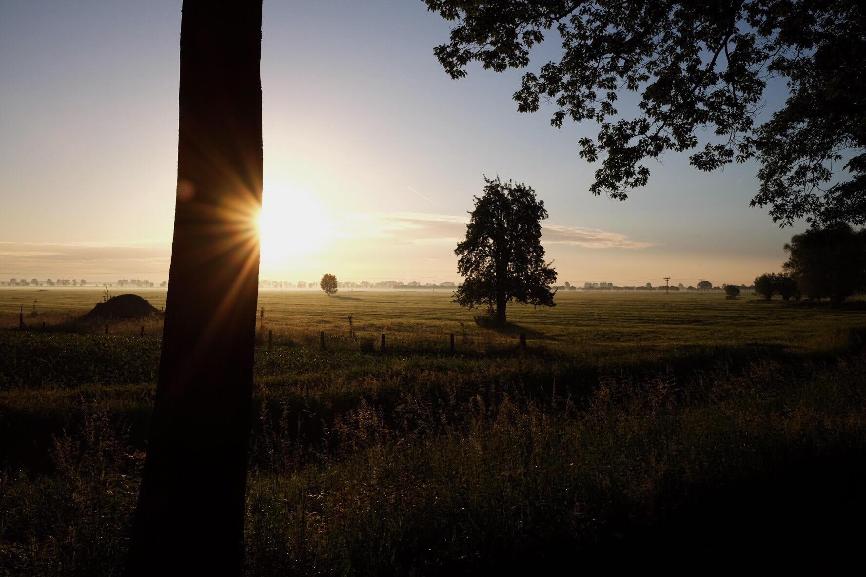 Elbdeich_Sonnenaufgang.jpg
