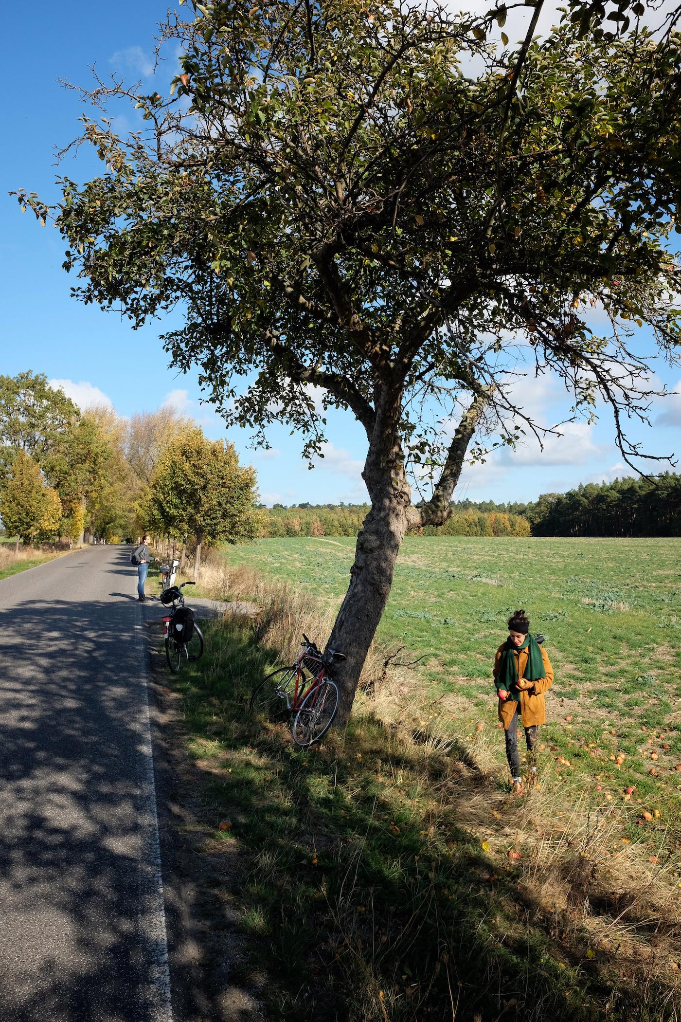 Beeskow__Sauen_wecyclebrandenburg18.JPG