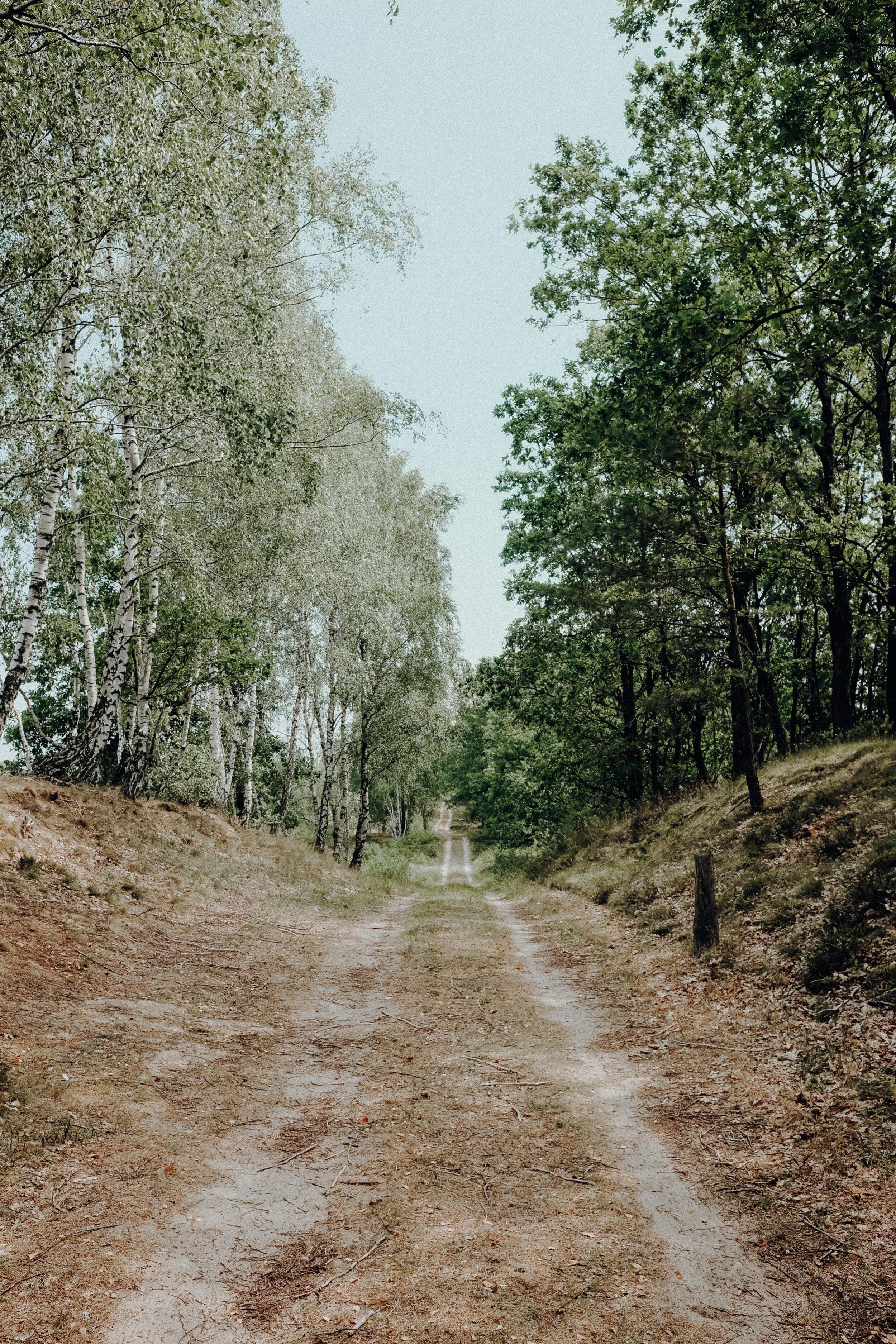 DSCF5446.jpg