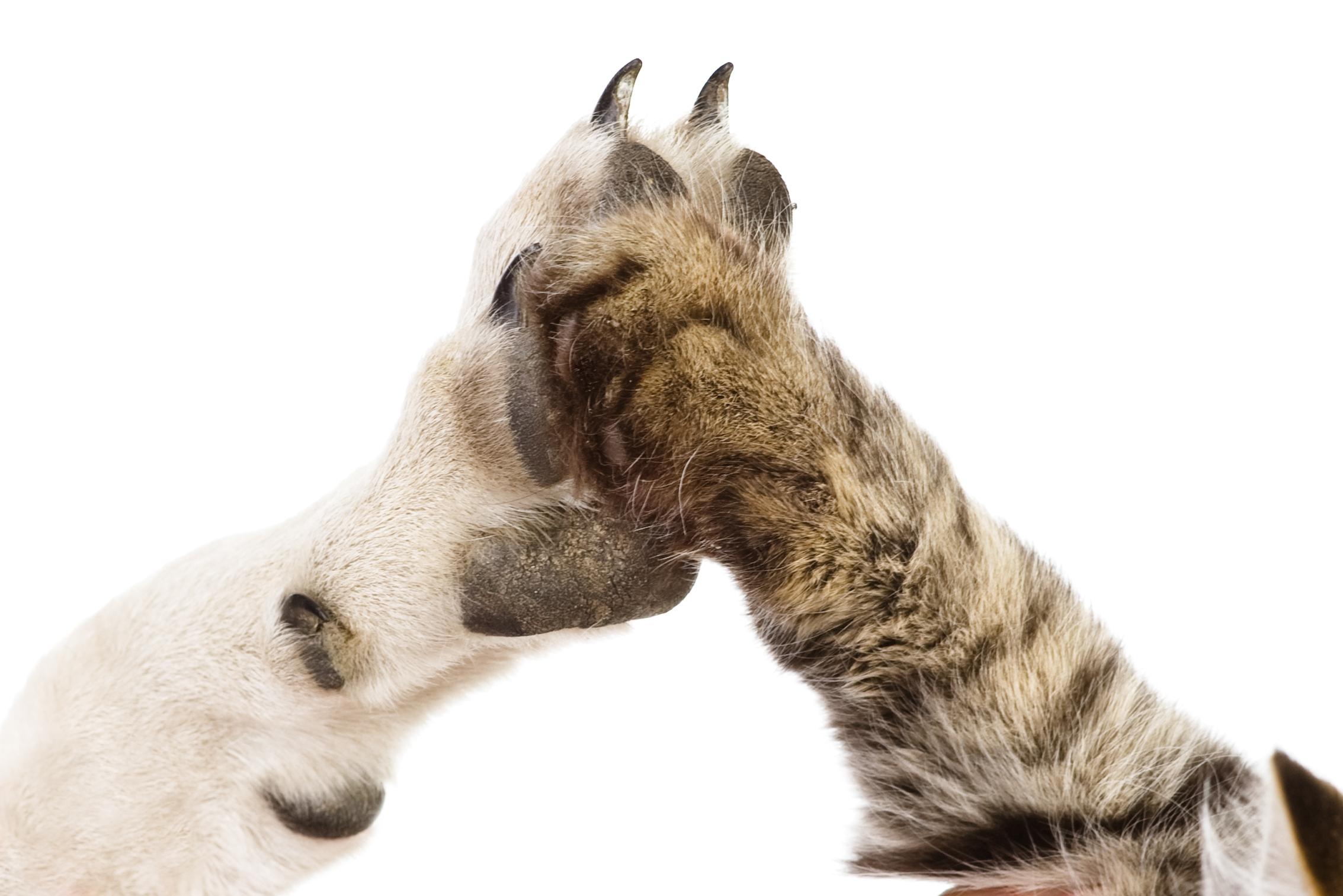 The best international dog behavior seminars for veterinarians, dog trainers, and veterinary technicians.