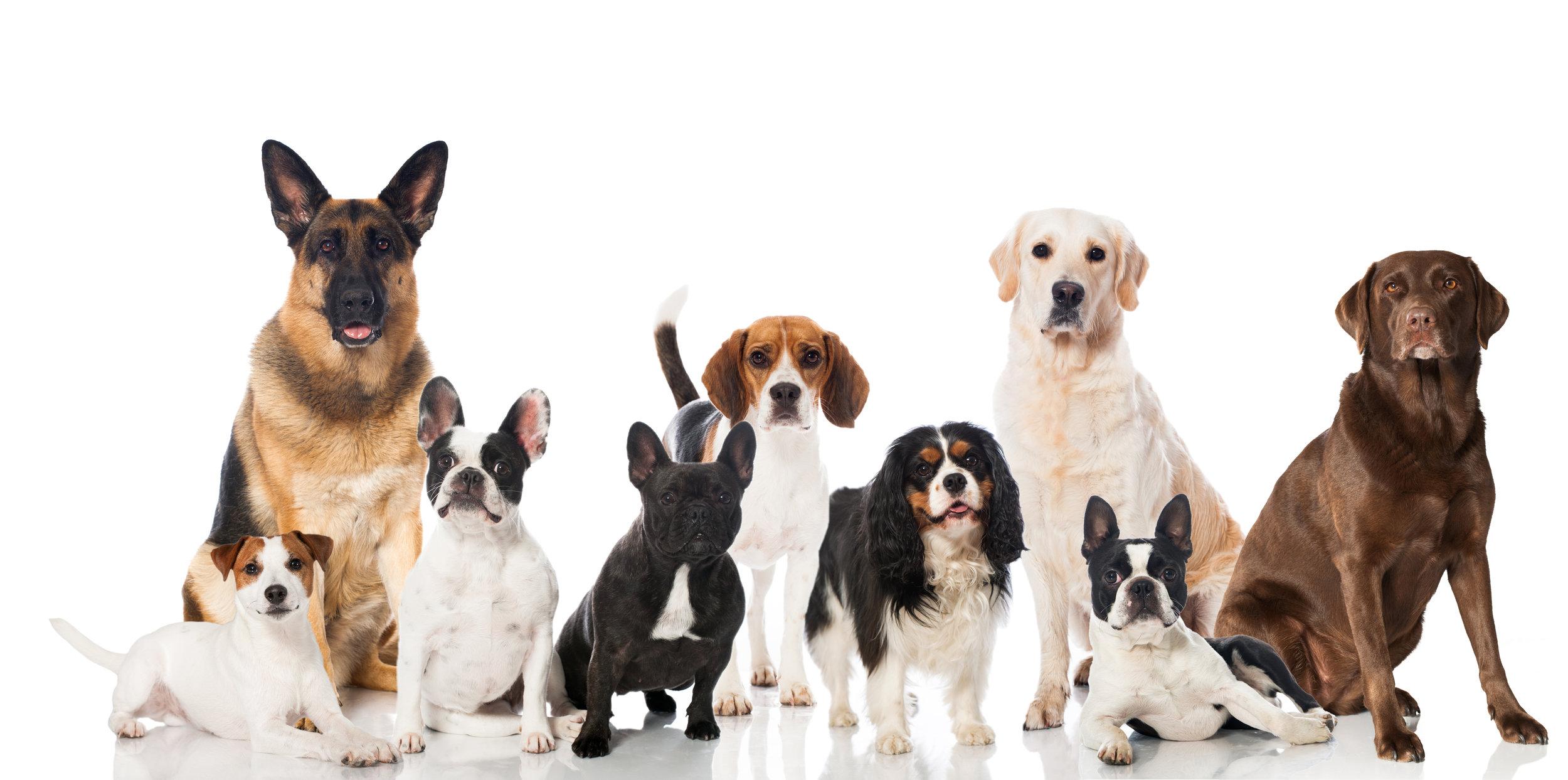 International dog behavior seminars in Europe, Canada, Australia, Asia.