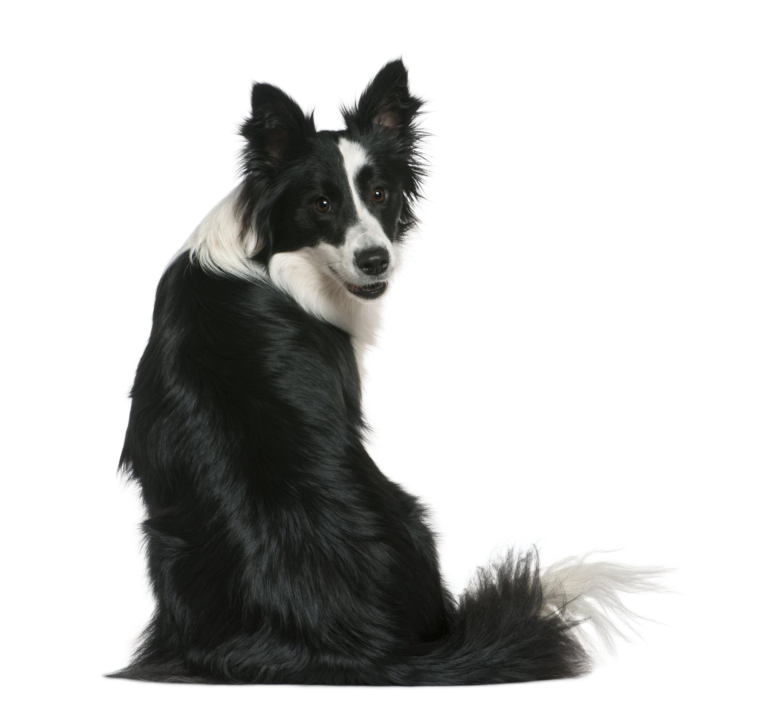 Best International foundation positive reinforcement clicker training dog training seminars in Europe, Canada, Australia, Asia.