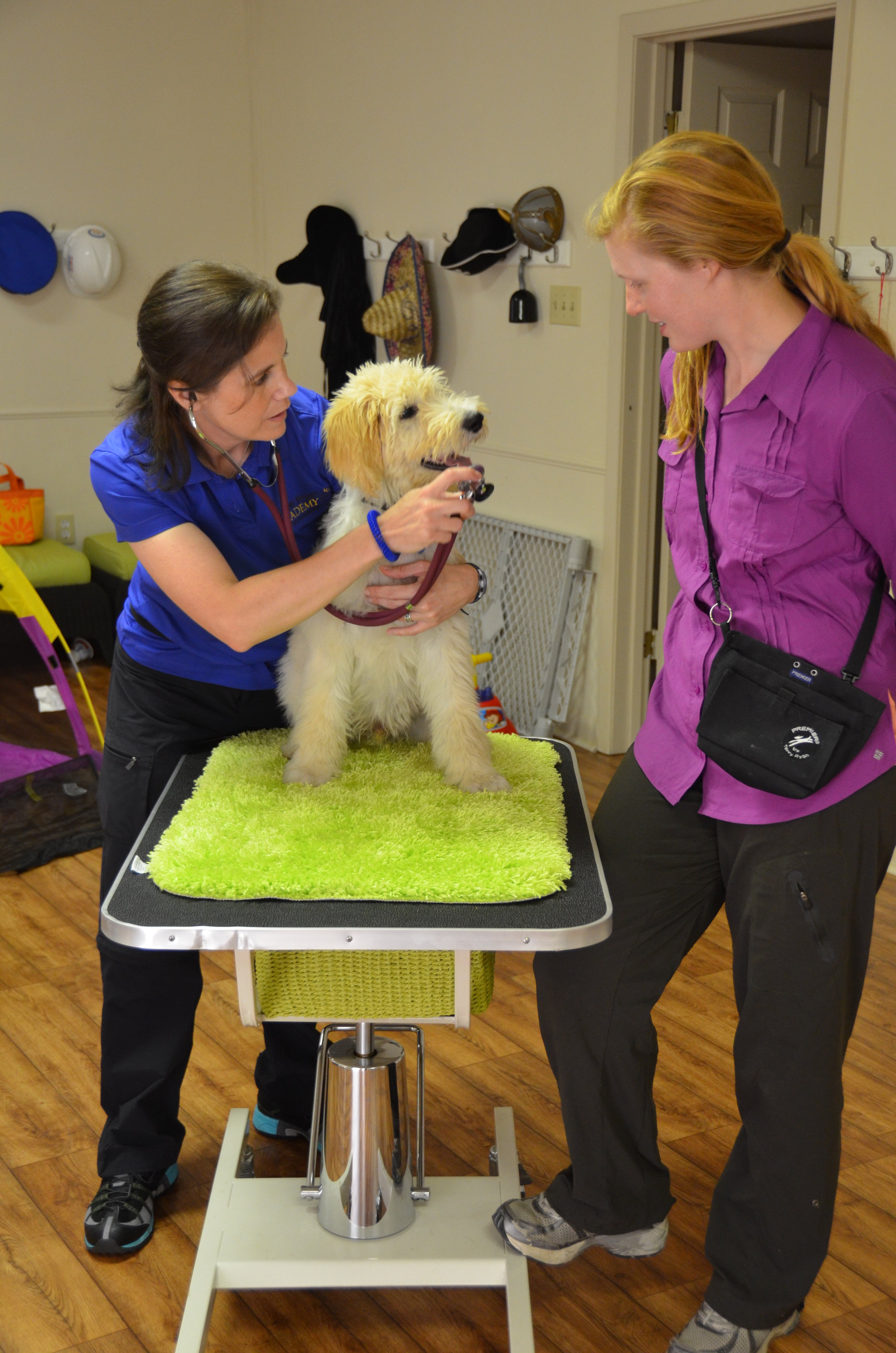 Puppy Start Right Online Course for veterinarians and vet techs