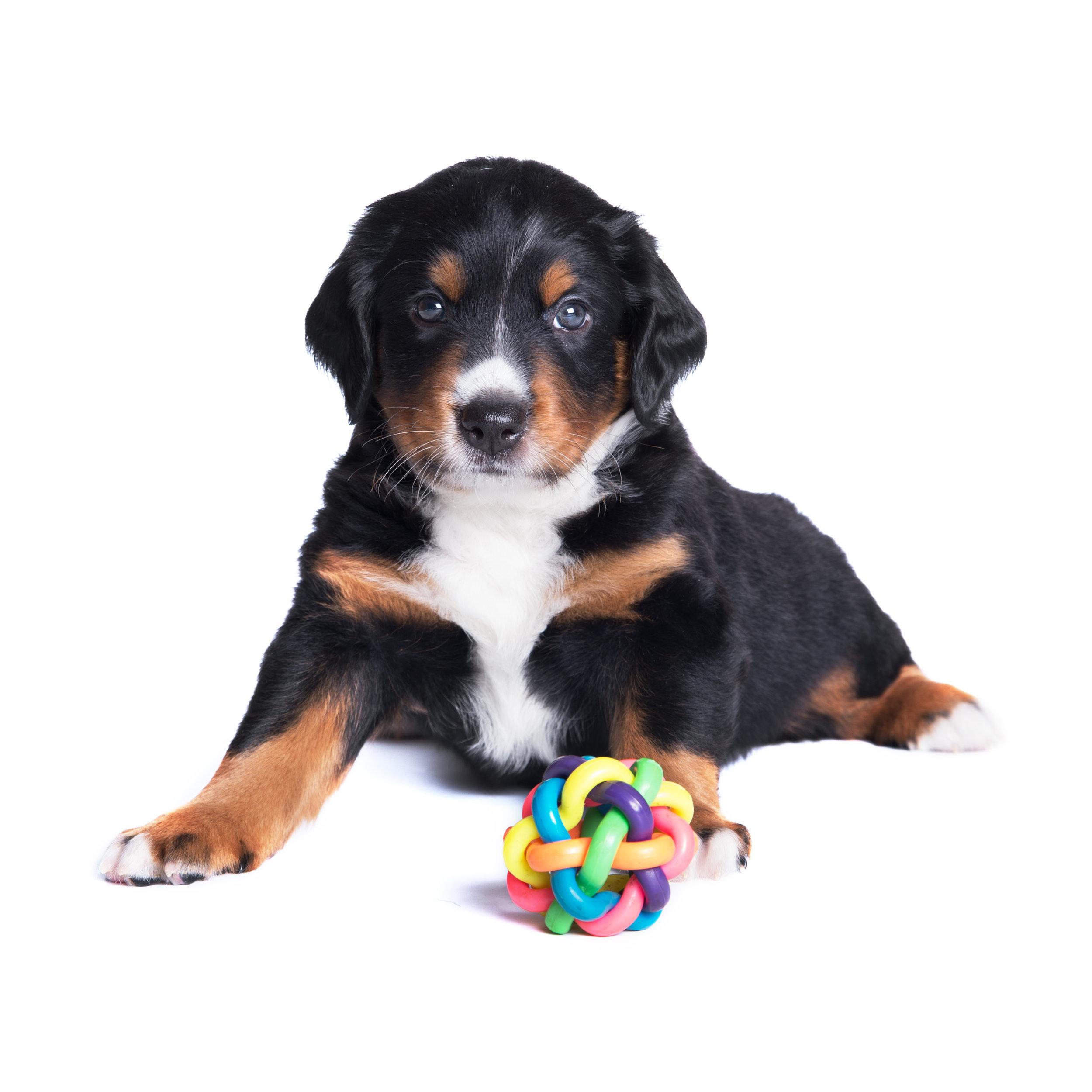 Dog training and behavior seminars for dog owners, including dog aggression, dominance, alpha, potty training, dog biting.
