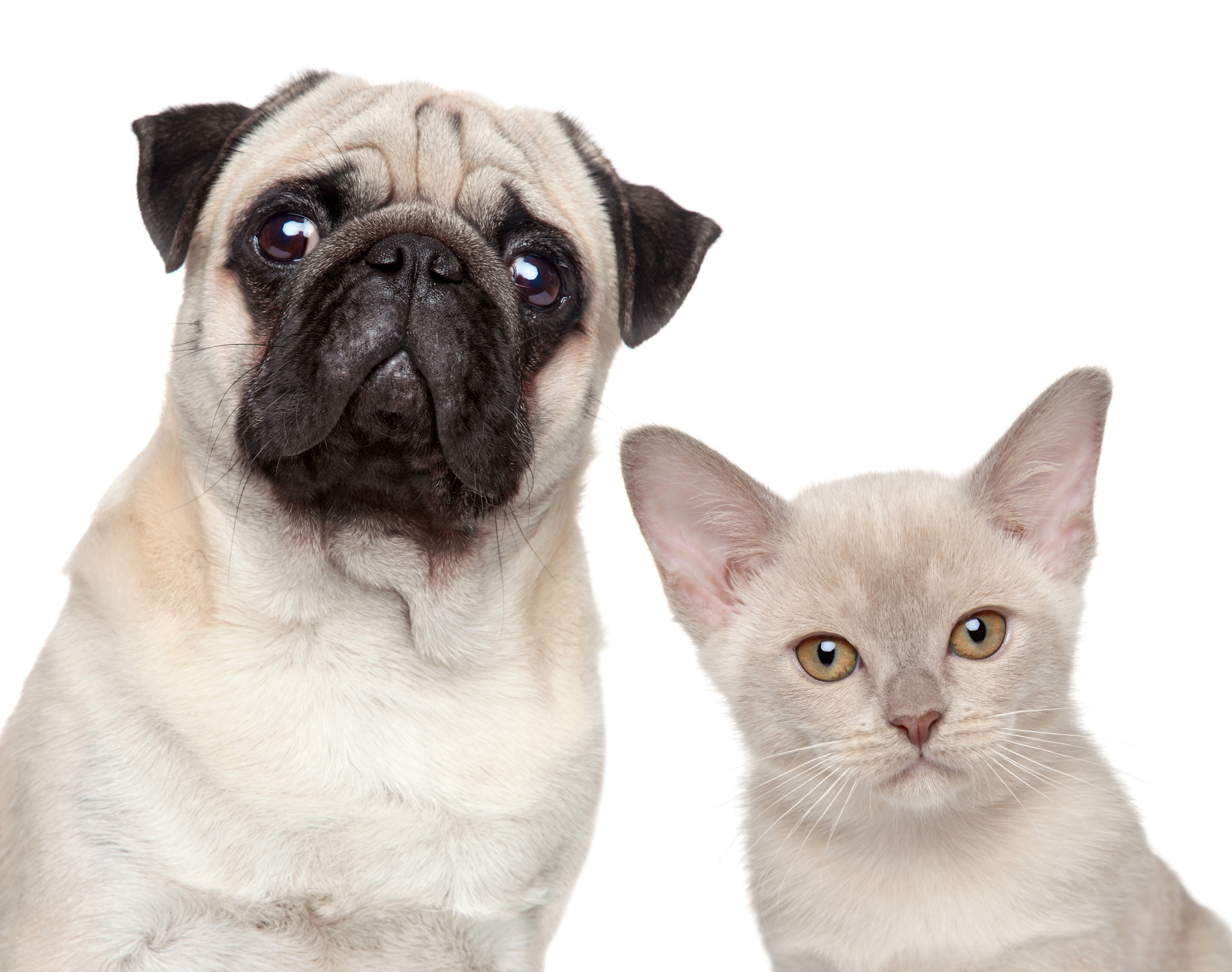 Long-distance phone consult with best veterinary behaviorist for dog aggression, separation anxiety, fear, dog bites, cat aggression, cat peeing, dominant dog, alpha dog, dominant cat.