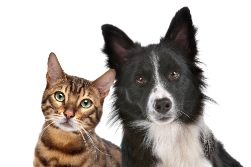 Veterinary behavior and training in vet offices and vet hospitals.