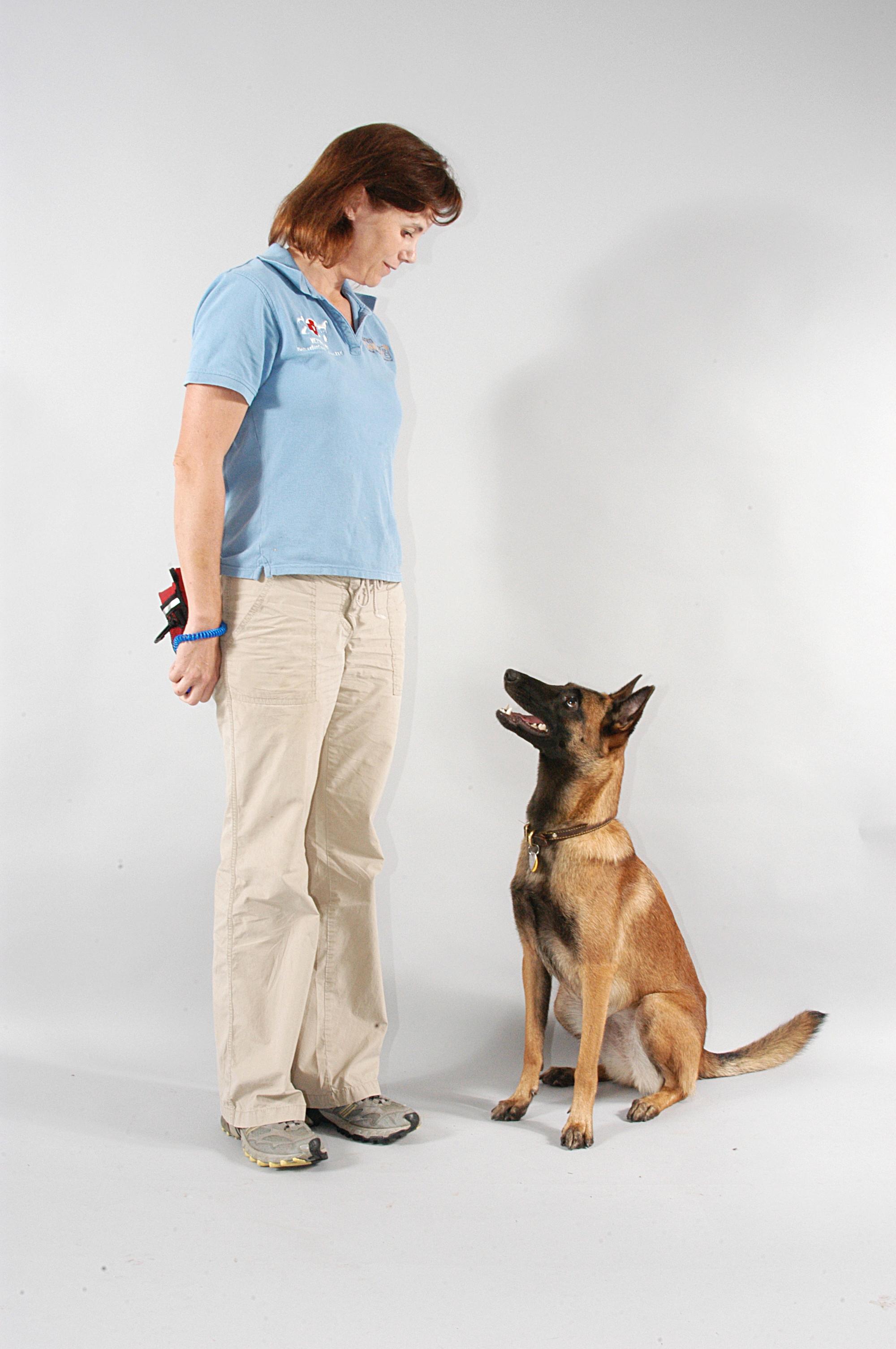 Best dog trainer seminars and webinars for dog aggression, dog training, leash reactivity, separation anxiety, fear free, vet handling.