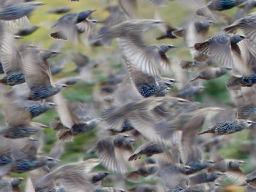 Vögel auf dem Weg Richtung Süden