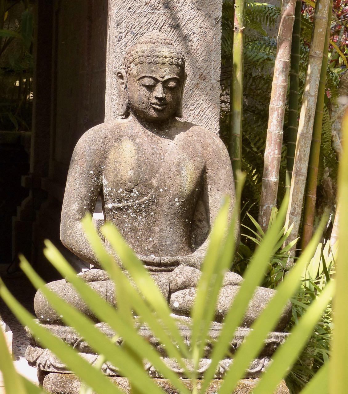 Budda Farn.jpg