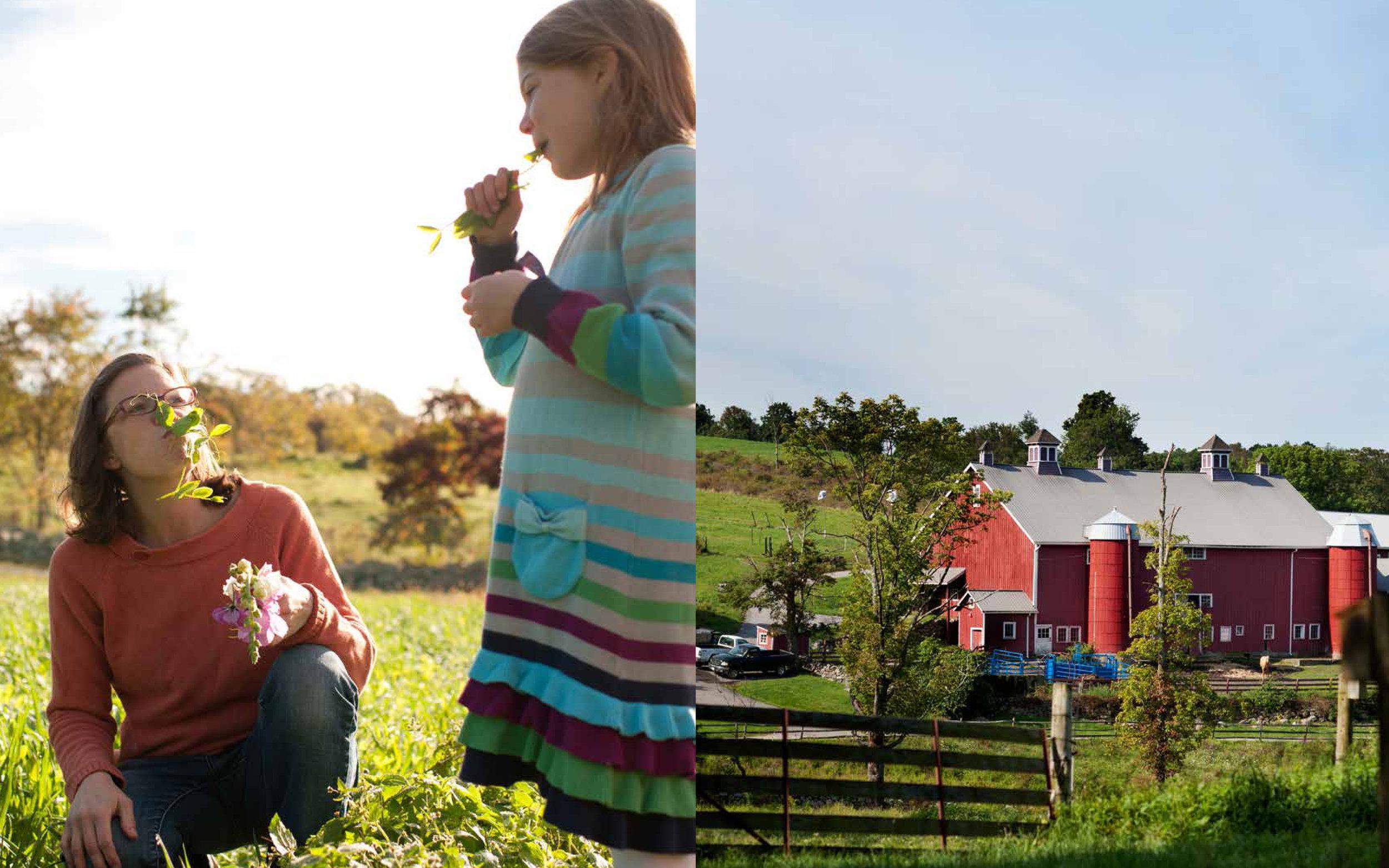 013-farm.jpg