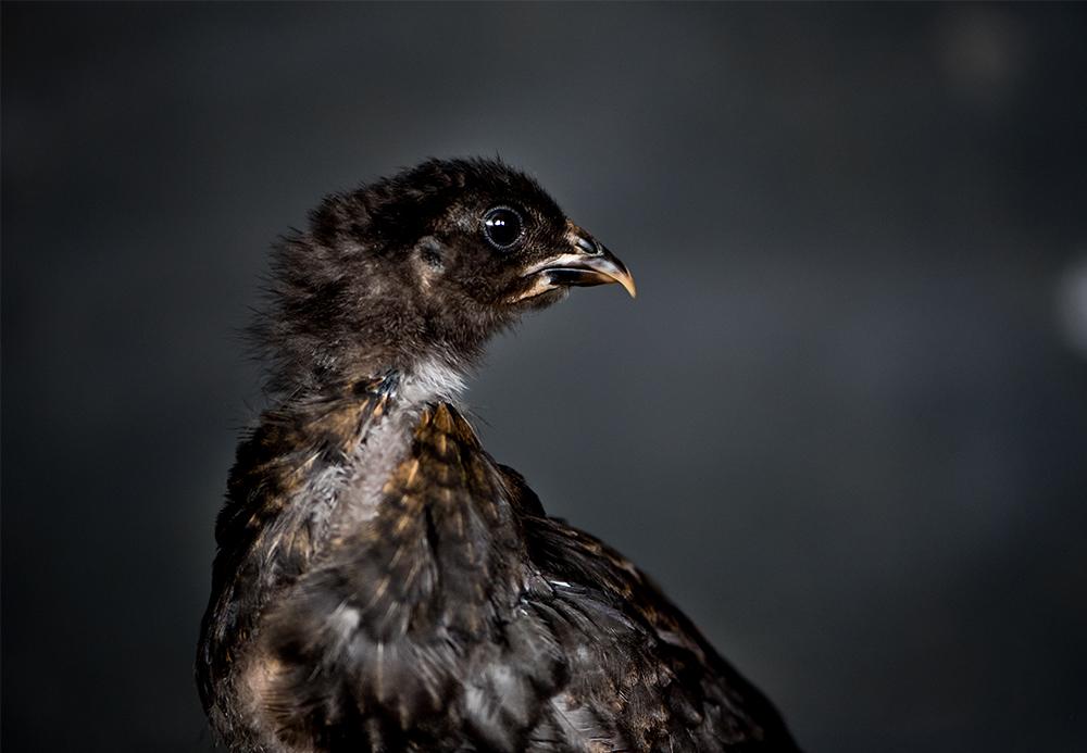 chick-2.jpg