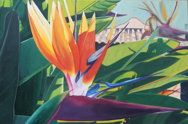 Bird of Paradise, San Juan Capistrano