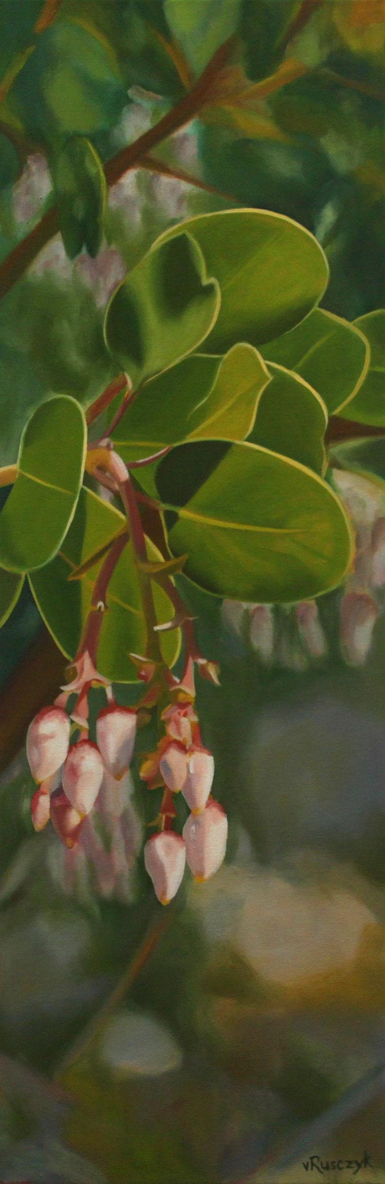 Manzanita Blossoms
