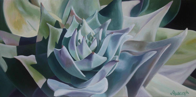 Lotus Dudleya