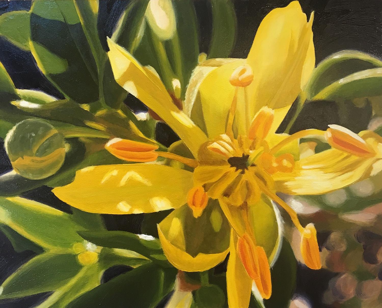 Creosote Blossom